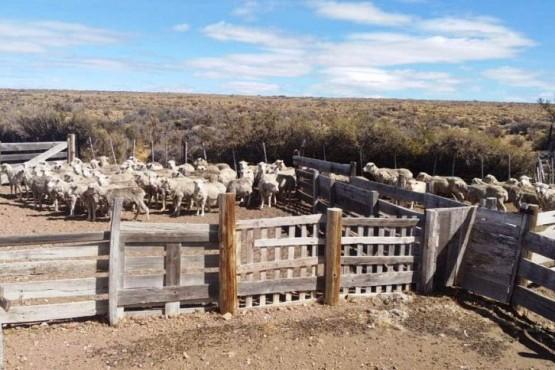 Los animales que fueron recuperados de la estancia de la suboficial.