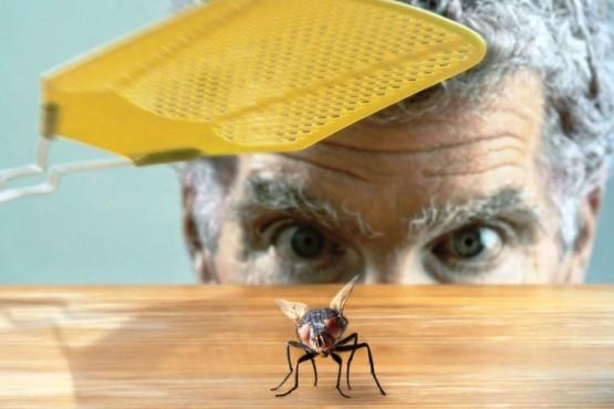 Los vecinos se las ingenian para eliminar los insectos (foto ilustrativa).)