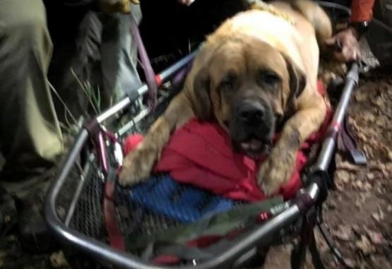 Emotivo rescate de un perro de 90 kilos que no podía bajar de una montaña