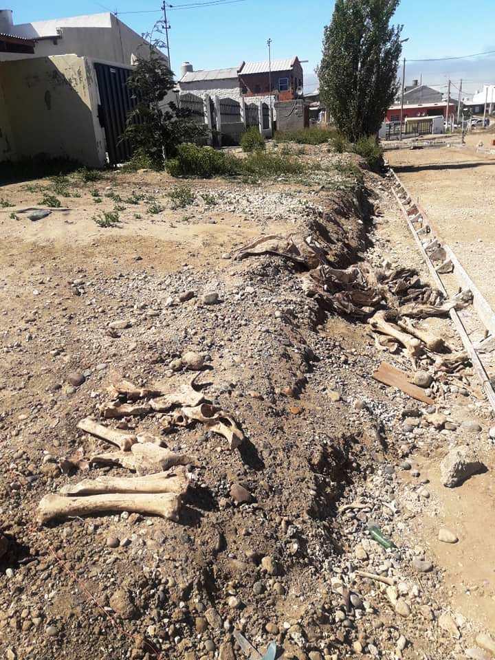 Algunos de los huesos encontrados.