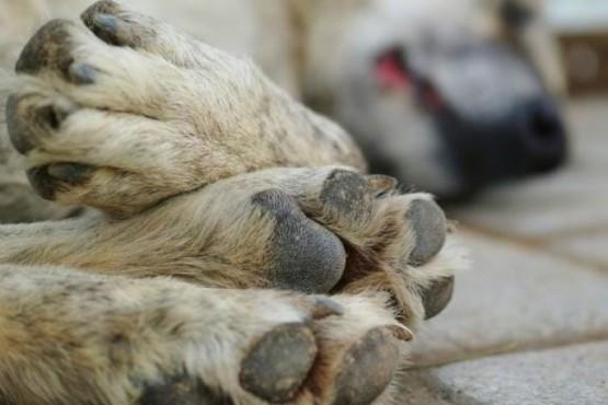 Bienestar Animal continúa con la castración en barrios.