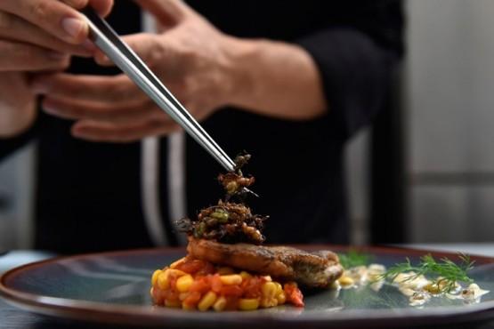 Comida gastronómica (Imagen ilustrativa)