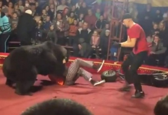 En plena función de circo, un oso atacó a su domador y casi lo mata