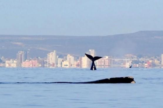 El mar de Puerto Madryn.