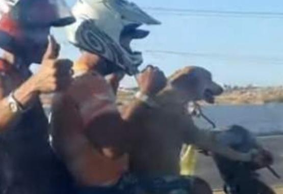 El animal iba en la moto con otras dos personas. Foto: Captura de pantalla