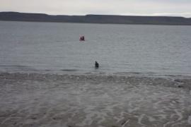 Buscan intensamente a un hombre que se tiró al agua
