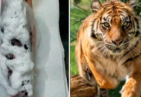 Pidió que le hagan un tatuaje de un tigre en un brazo y el resultado fue sorprendente