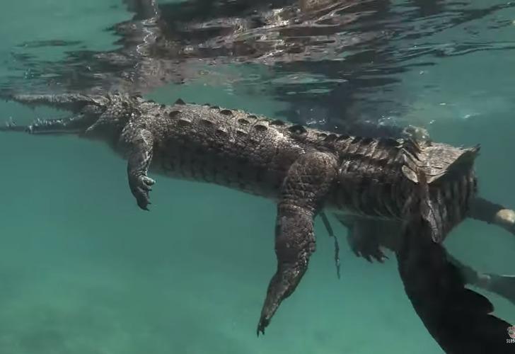 Captura de pantalla. Las imágenes del buzo con el reptil causan terror.