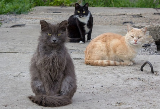 Descuidó unos segundos su auto y cuando volvió tenía dentro una invasión de gatos