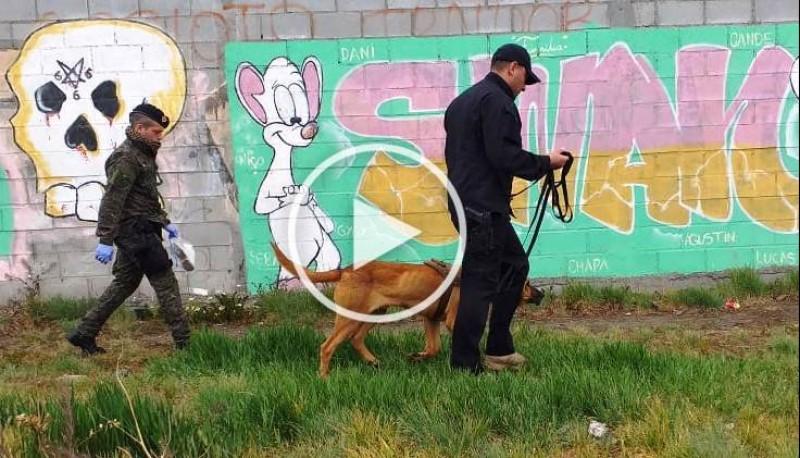 El can en acción (Foto:C.Robledo).