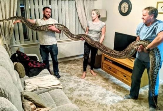Quiso sorprender a su familia y llegó a su casa con una pitón de 5 metros