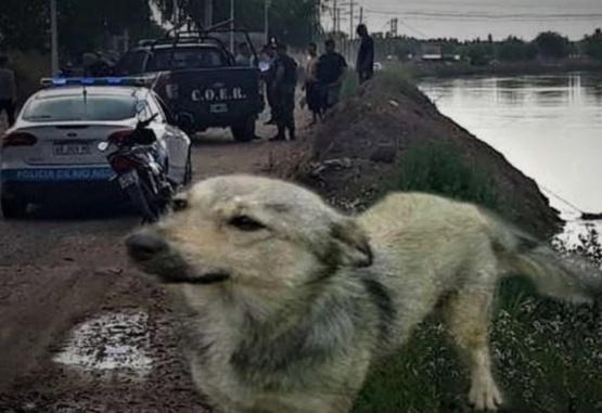El animal lloró cuatro días en el lugar. (Foto: Gentileza ADN Sur)