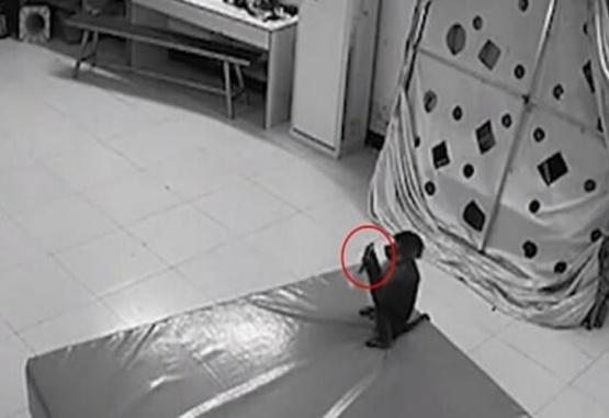 Un mono robó un celular y realizó compras por Internet