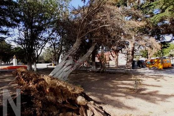 El viento tiró un árbol por las fuertes ráfagas.
