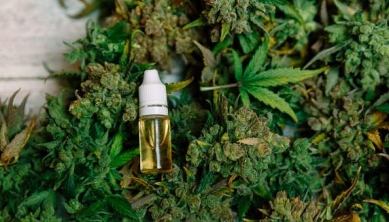 El aceite de cannabis.