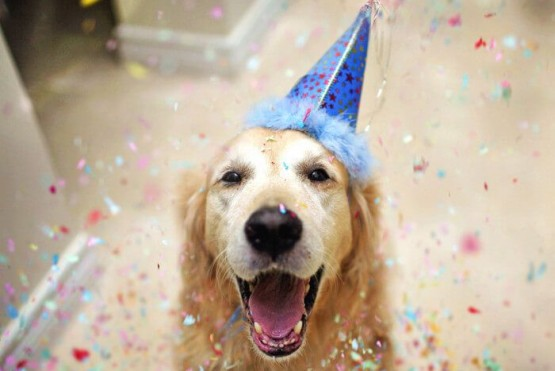 Cumpleaños de perro. (Pinterest)