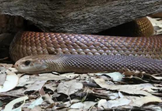 La rápida reacción de una madre evitó que su hijo sea mordido por una serpiente