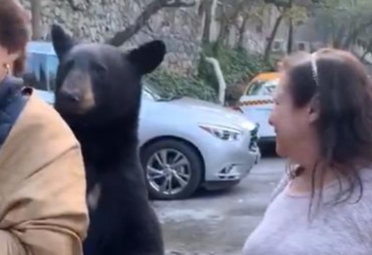 El momento en que el oso se acerca a la mujer. Crédito: captura de pantalla