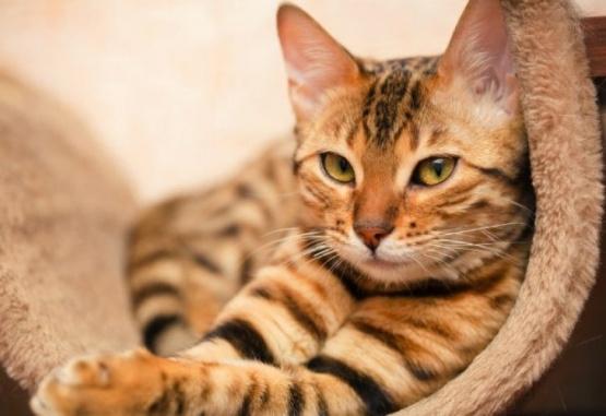 Le afeitaron la cola a un gato y se volvió viral por su parecido a un pene
