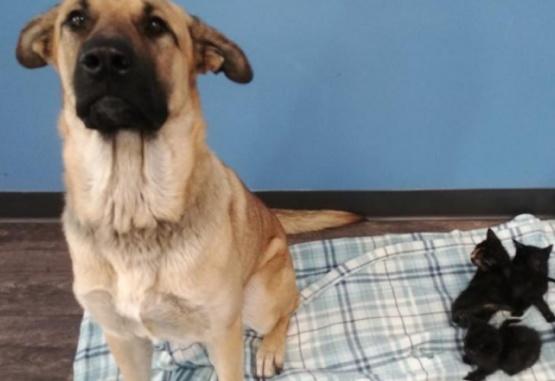 Encuentran un perro callejero que tenía 5 gatos a su cuidado