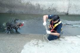 Rescataron a un perro que era arrastrado por el agua
