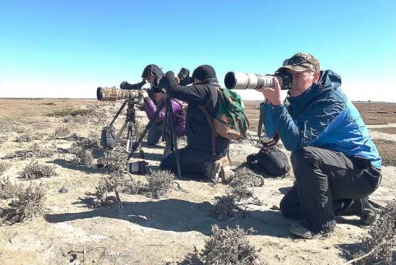 Observación de aves en el estuario.