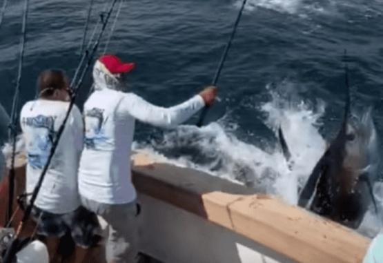 Captura de pantalla del momento en que el pez vela ataca la embarcación.