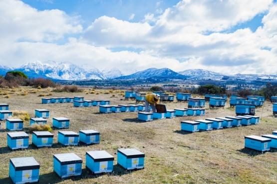 Un recorrido por dentro de la miel más austral del país