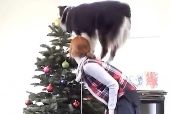 Secret ayudando con el árbol.