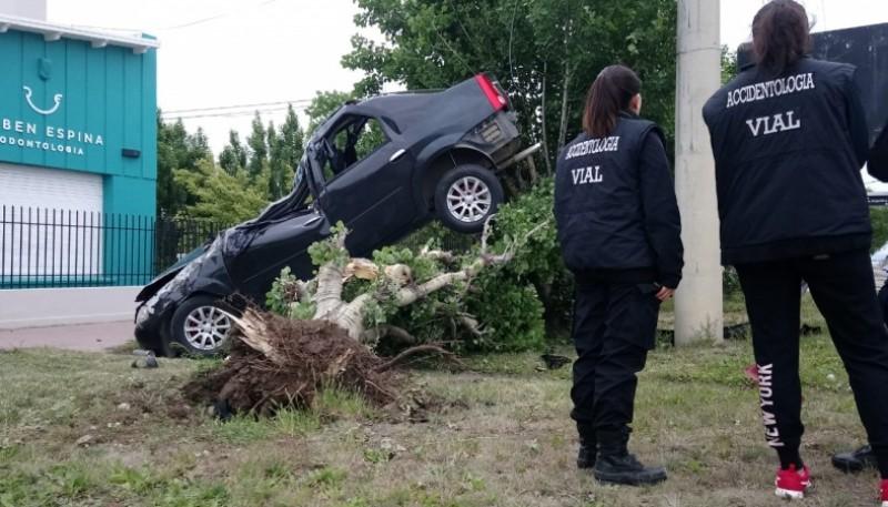 El vehículo sobre el árbol (Foto J.C.C.)