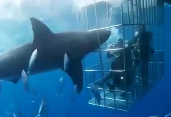 Captura de video del momento en que el tiburón quedó atrapado en la jaula.