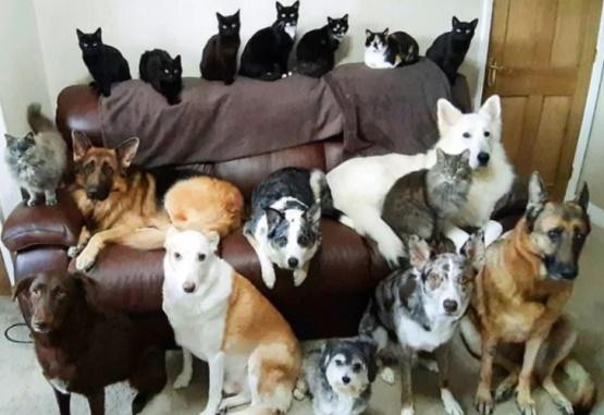 La mujer practicó durante dos semanas para obtener la imagen perfecta de sus mascotas.