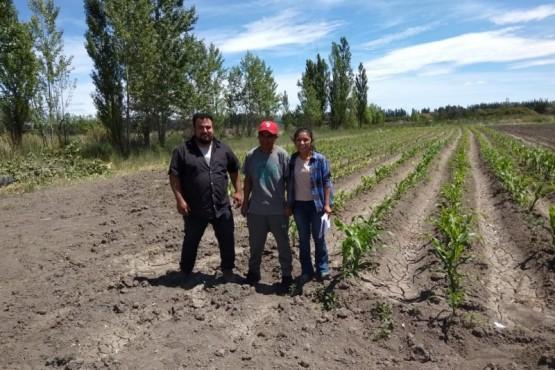 El Mercado Concentrador trabaja en la producción hortícola del VIRCh