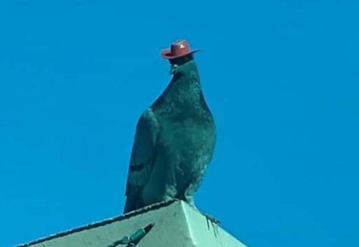 Muchos transeúntes se sorprendieron al ver los pequeños sombreros que tienen las palomas.