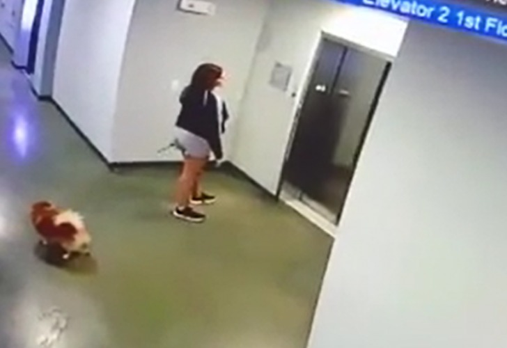 Captura de video del momento en que el perro está por subir al ascensor con su dueña.