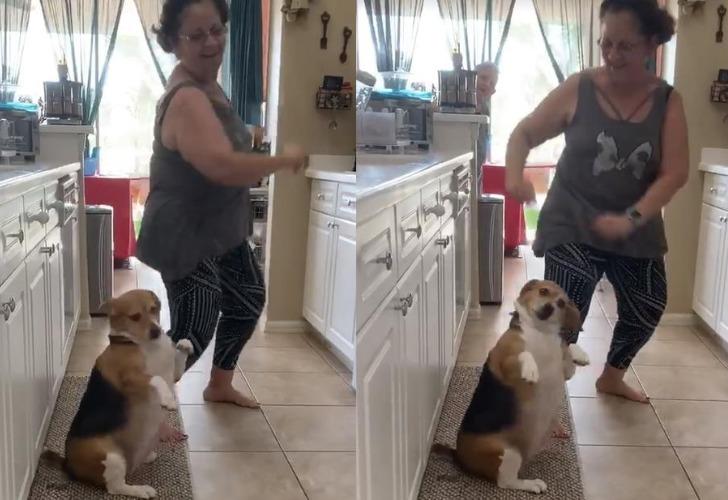 Bailey se convirtió en un verdadero furor en redes sociales. Foto: Captura de video.
