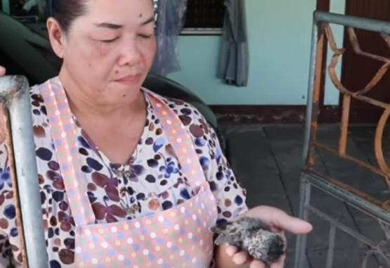Chabaprai Nilpet con el gato de dos cabezas recién nacido en su mano. Foto: Captura de video