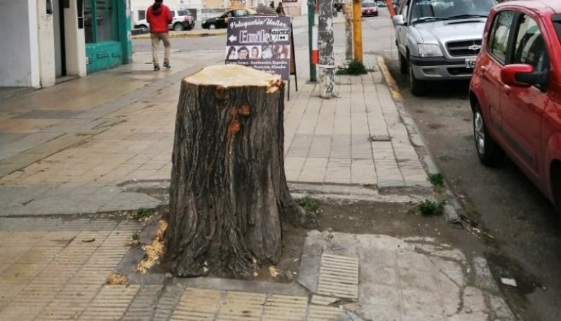 Árbol cortado en Av. Kirchner.