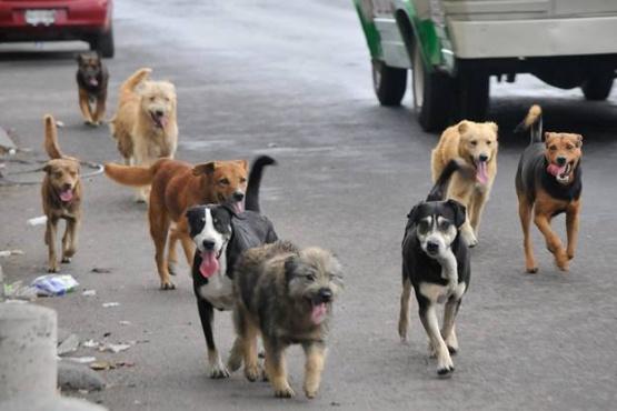 Habrá secuestro de perros durante el Paseo Aniversario (Ilustrativa)