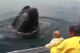 El tierno vídeo de una bebé que juega con una ballena