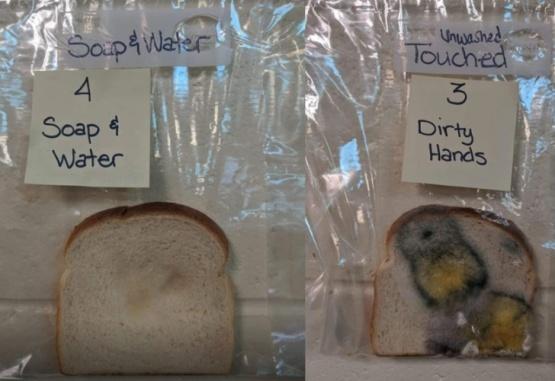 De un lado, el pan tocado con las manos lavadas y a la derecha con las manos sin lavar. Facebook/Jaralee Annice Metcalf