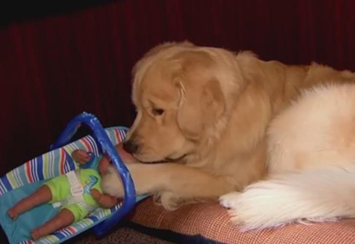 Ben, el perro que se volvió viral por robarse los juguetes que iban a ser repartidos en Navidad. Foto: Captura de video