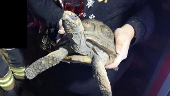 La tortuga fue rescatada.