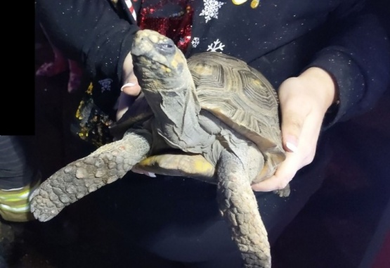 La imagen de la tortuga fue tomada por los bomberos que llegaron al lugar. Foto: Essex County Fire and Rescue Service
