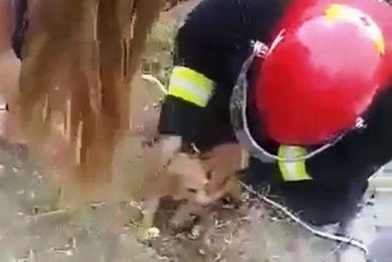 Bombero tras sacar al perro.