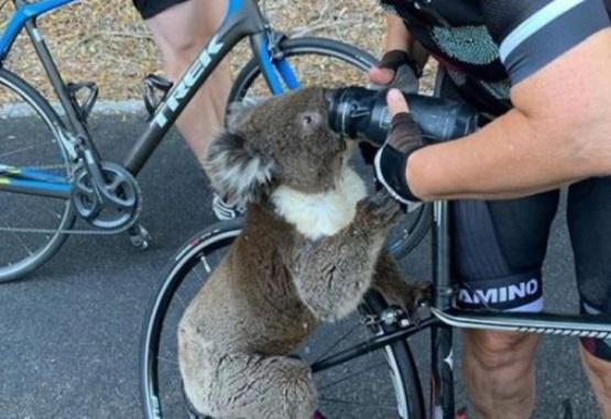 El animal se acercó a la mujer quien no dudó en ayudarlo. Foto: Instagram @bikebug2019