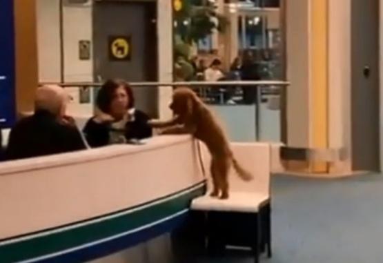 Captura de video del momento en que este adorable perro se acerca a la mujer.