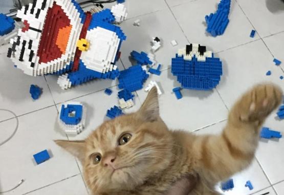 El gato destruyó accidentalmente la escultura hecha con piezas de LEGO. Foto: Facebook