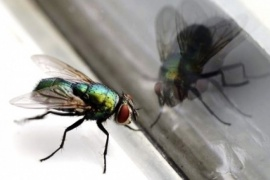 Reclamo de los vecinos por la  invasión de moscas en Río Gallegos