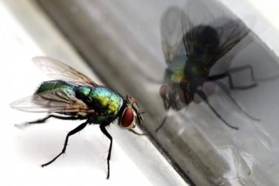 Reclaman por la cantidad de moscas en la ciudad.